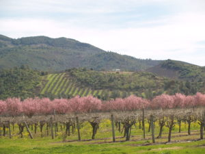 800px-SPRING_IN_THE_VINEYARDS