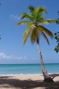 640px-1859-palm tree