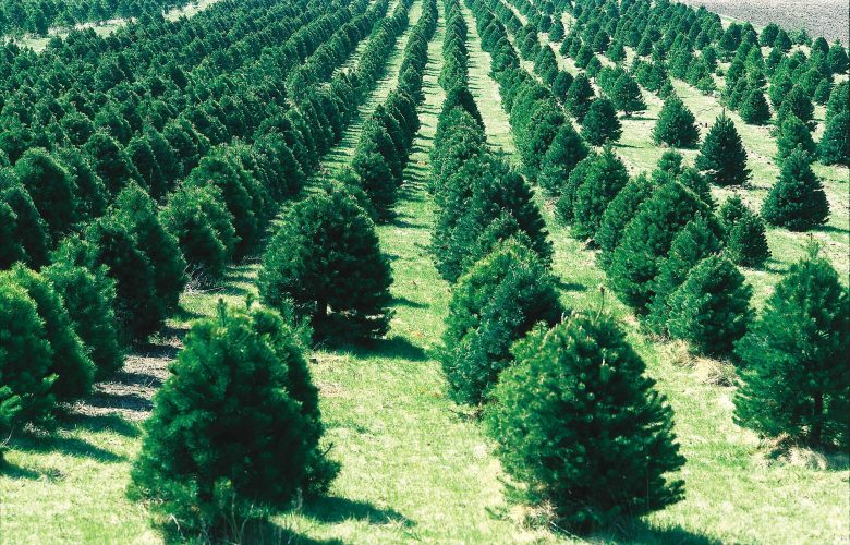 Christmas Tree Bill.Proposed Bill Would Rein In Tree Police In Michigan Towns